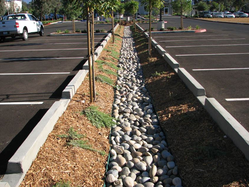 Trees and Rocks in a Parking Lot for Stormwater Prevention
